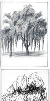 DF - Tree in 5 Dif. Media