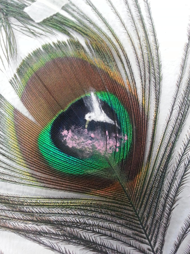 Albino Peacock Feathers on a Peacock Feather by