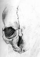 Skull study by ravinsilverlock