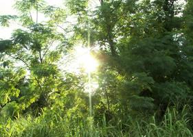 through the trees by ravinsilverlock