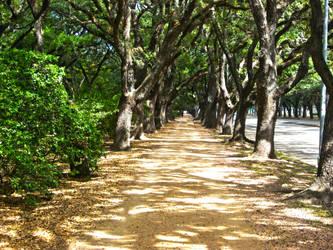 Pathway by ravinsilverlock