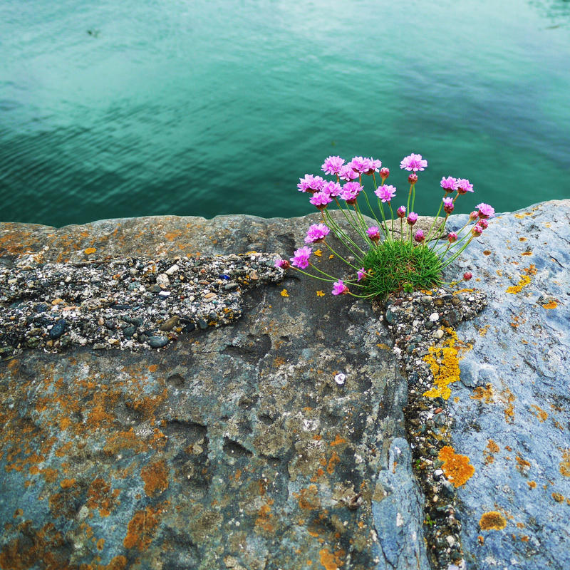 Sea green and sea pinks by blue eyed kelpie on deviantart sea green and sea pinks by blue eyed kelpie mightylinksfo