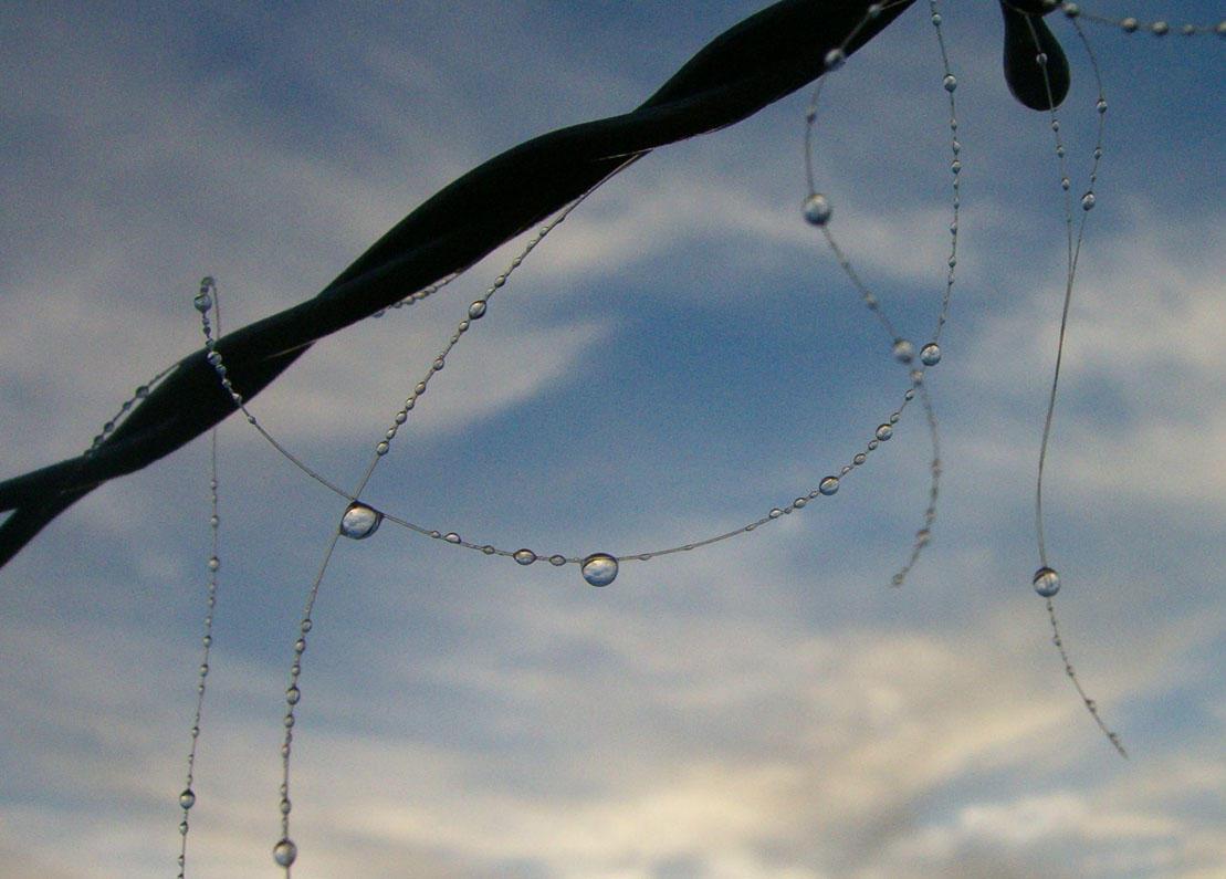 drops of sky by Blue-eyed-Kelpie