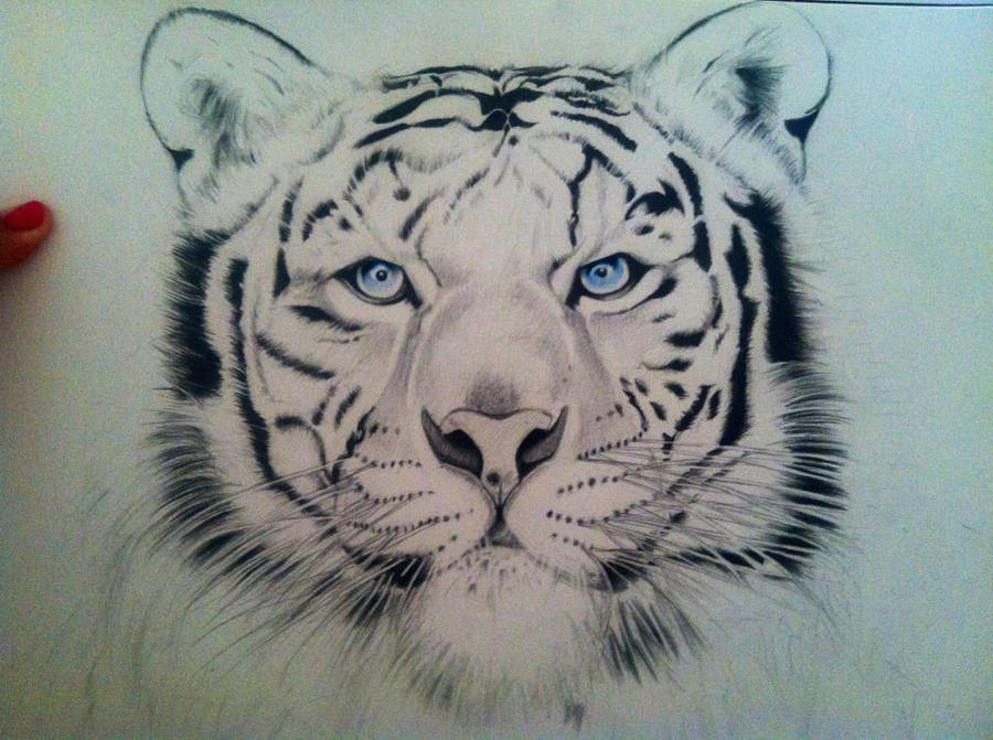 Line Drawing Of A Tiger S Face : White tiger by dmalakian on deviantart