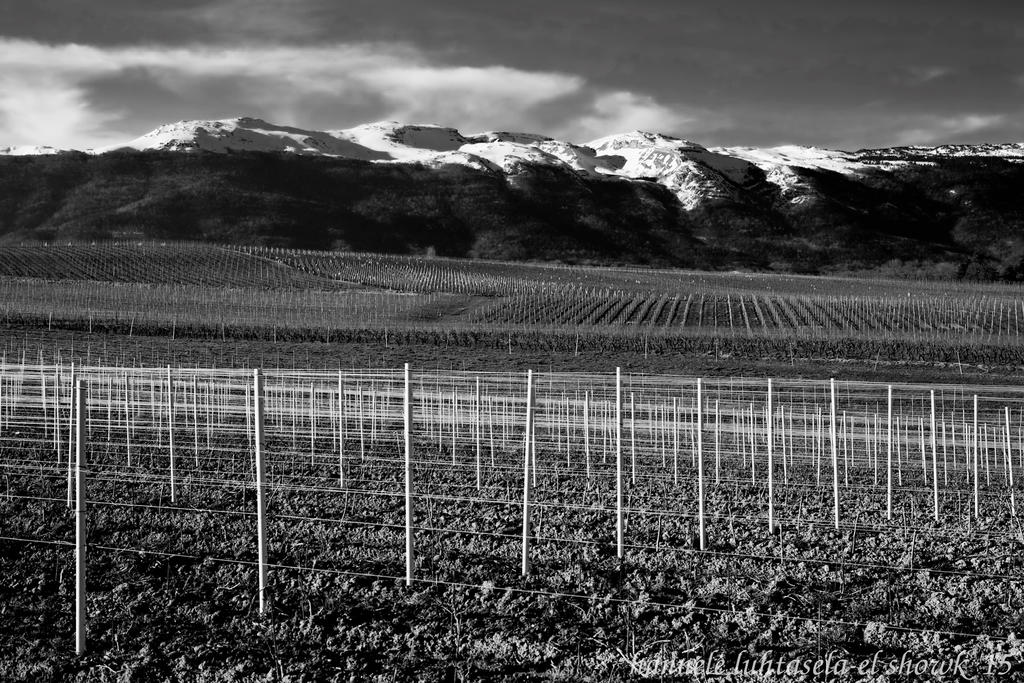 vineyards and mountains by raido-ehwaz