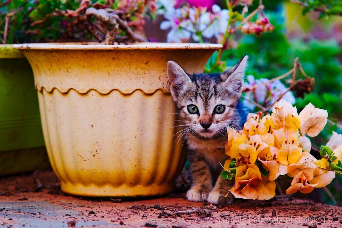 nimr + flowers by raido-ehwaz