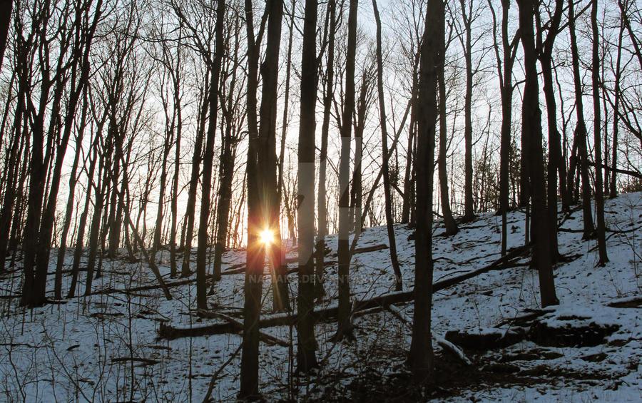 Sunshine crept softly by Nariane