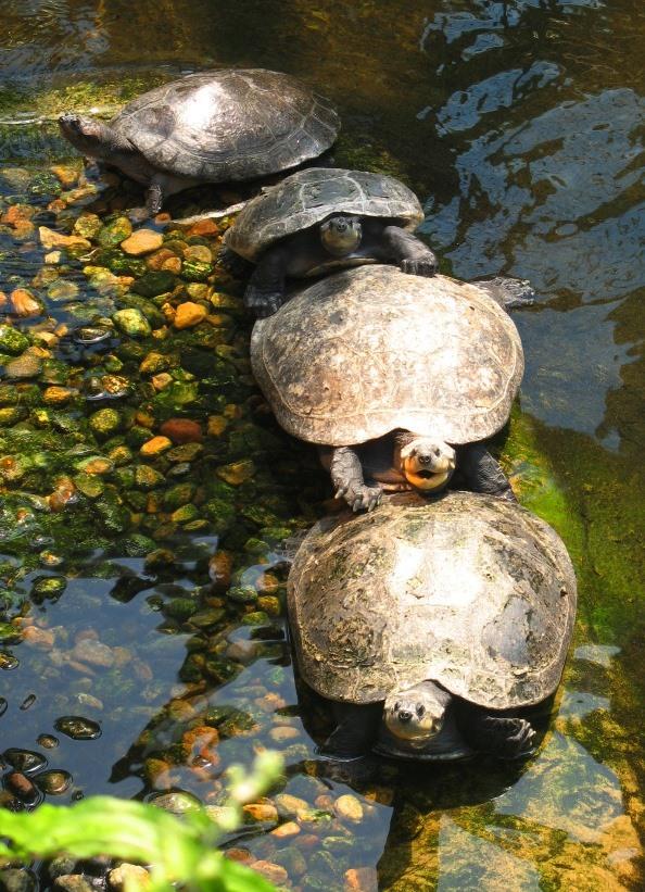 Turtles by Nariane