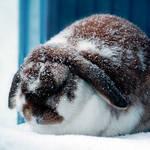 Snowbunny by Ravenveer
