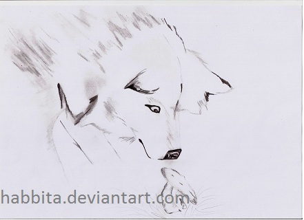Boceto [Sketch] Lobo [Wolf] by Habbita on DeviantArt