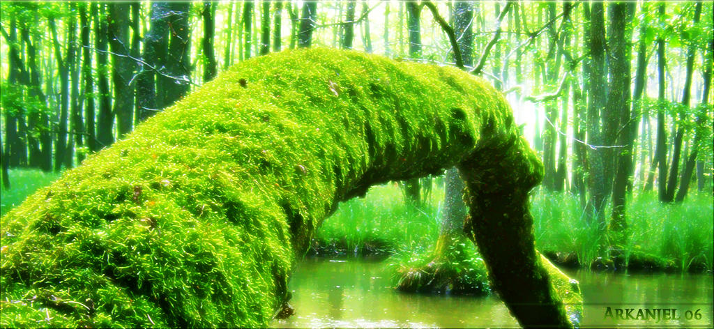 Mossy Log by Arkanjel8