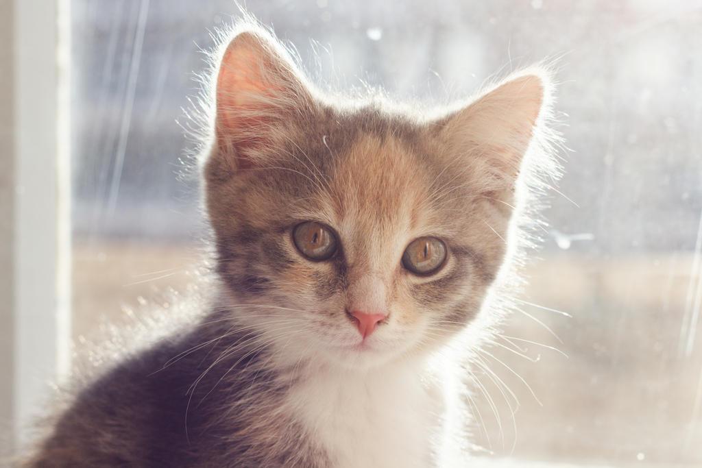 Little Besya by meofka