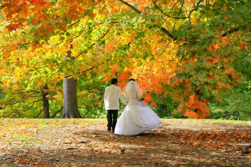 Park'o Romance by Nirr