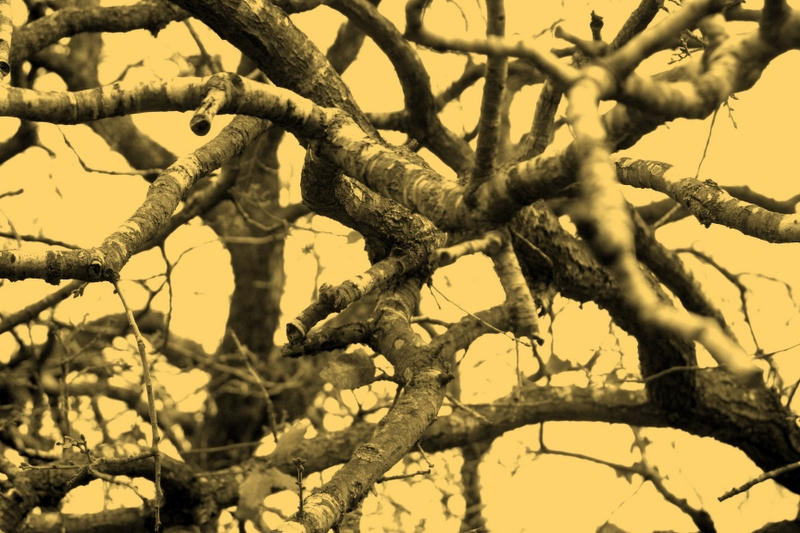 Devil's Tree by Nirr