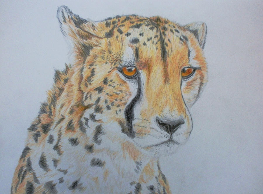 Cheetah by RoisinArt