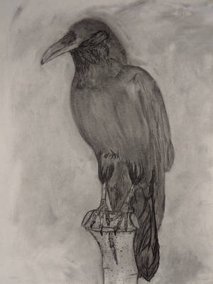 A raven in coal by Kineaw