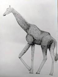 Giraffe by Kineaw