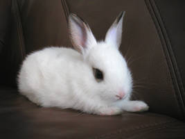 Bunny by pixi3angeldreamx