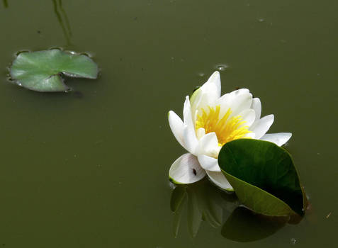 Pond of solitude