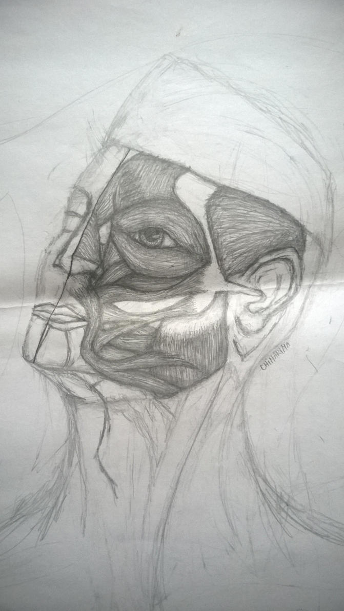 Face Muscle Anatomy Of Solider By Chiharima On Deviantart