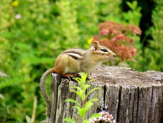 Chipmunk by RaveneyesTheWorgen
