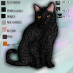 Shadowpaw from ShadowClan, ref sheet