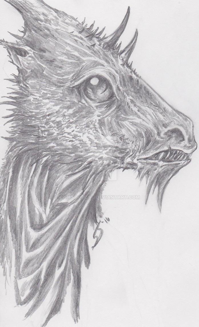 Dragon pencil sketch by shadoecat