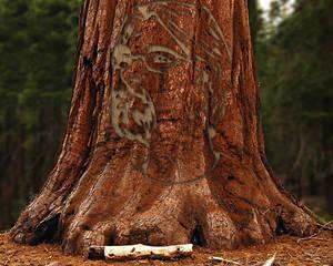 The Nathan Tree
