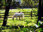 White Stallion by path2000