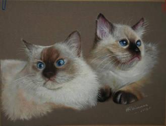 Cats by ArtbyAnuR