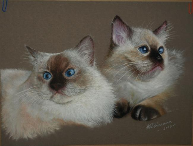 Cats by ArtbyAnuR