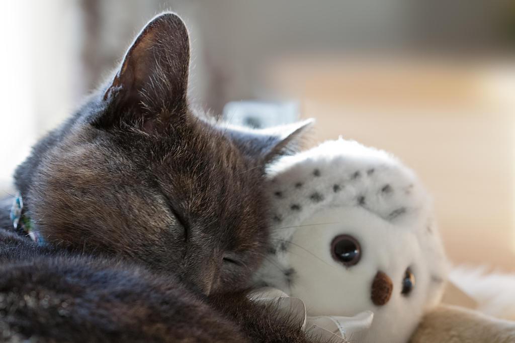 IMAGE: http://fc06.deviantart.net/fs70/i/2012/351/b/3/the_owl_and_the_pussy_cat_by_snomanda-d5oaiul.jpg
