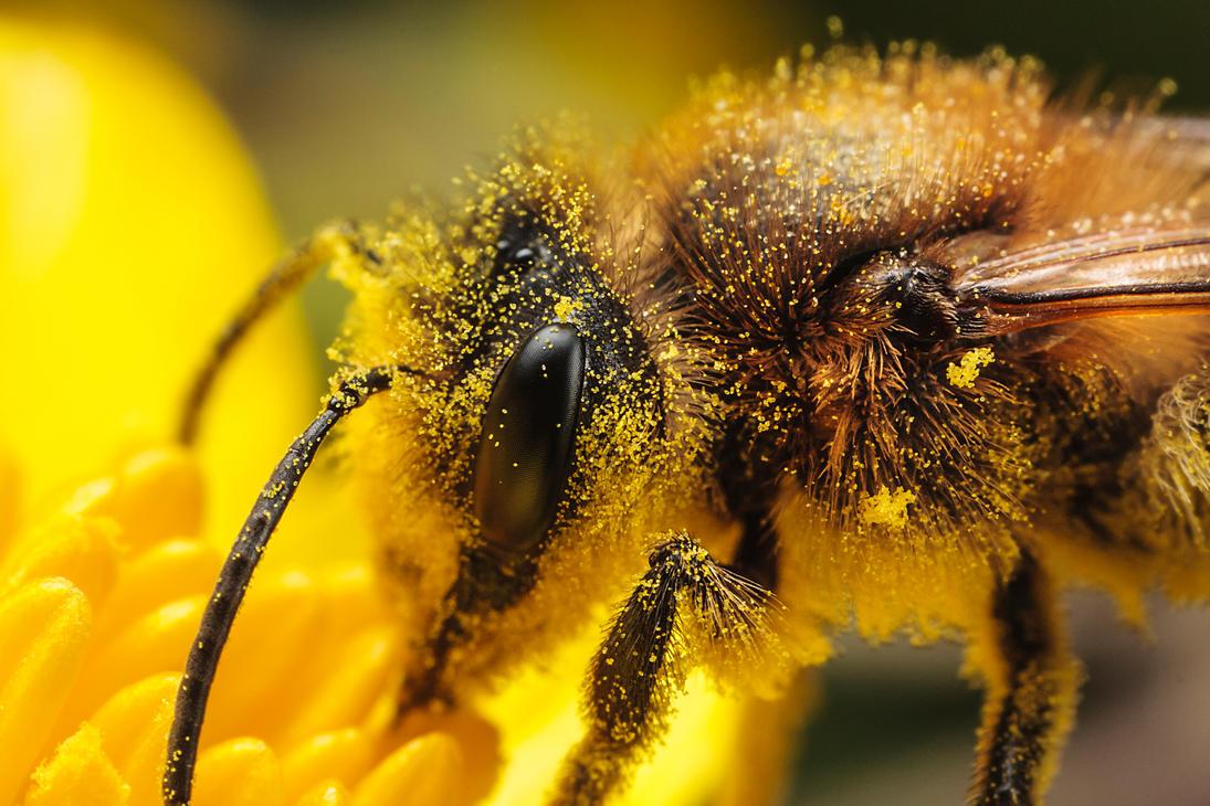 IMAGE: http://th09.deviantart.net/fs70/PRE/i/2013/097/2/2/solitary_bee_by_snomanda-d60svmr.jpg