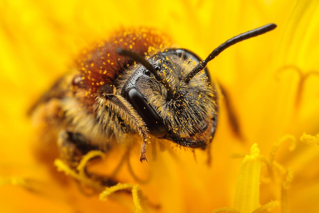 Mining Bee III by snomanda