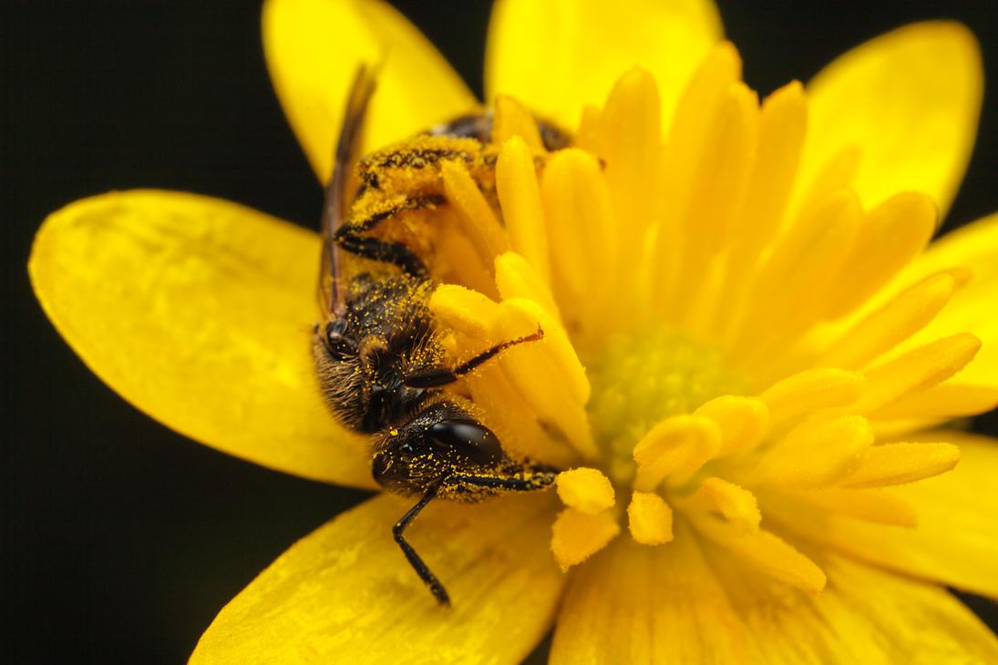IMAGE: http://th00.deviantart.net/fs70/PRE/i/2013/130/3/a/flower_hugging_bee_by_snomanda-d64rpb6.jpg