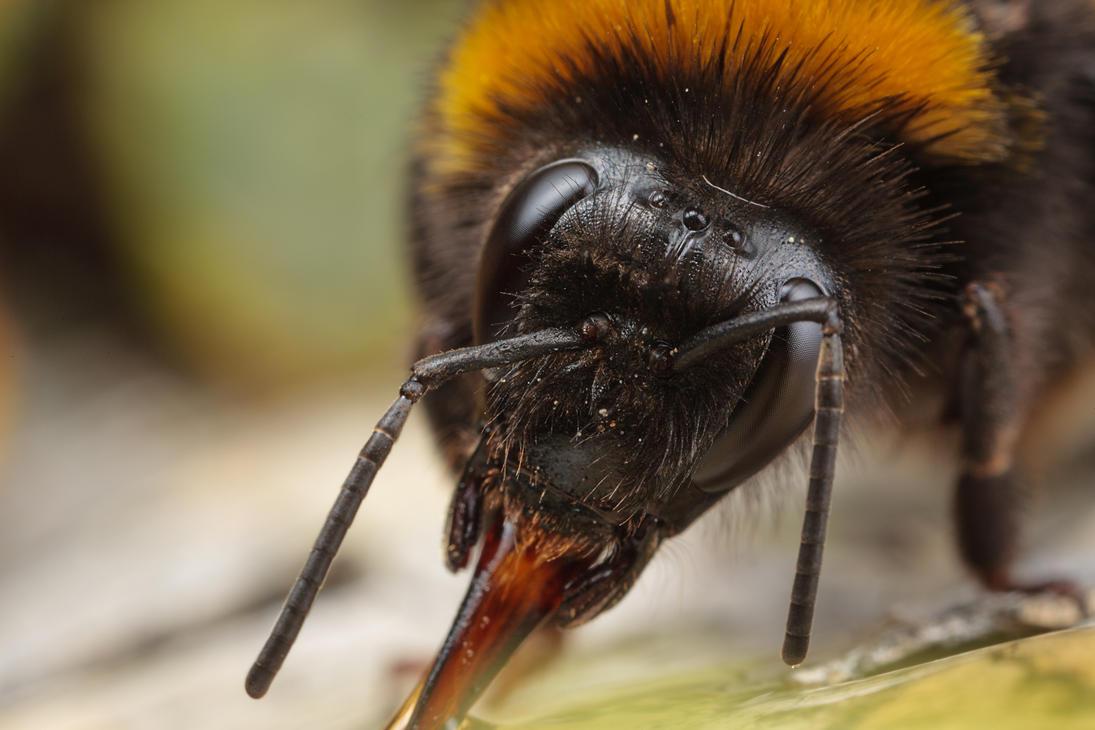 IMAGE: http://th04.deviantart.net/fs70/PRE/i/2013/164/8/f/bumblebee_by_snomanda-d68weiu.jpg