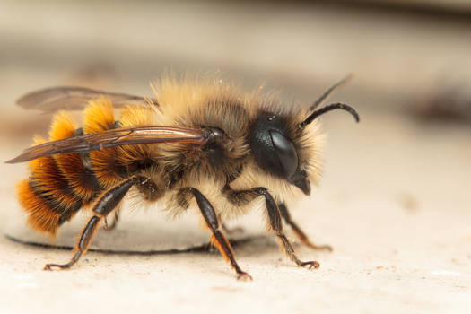 Mason Bee Redux