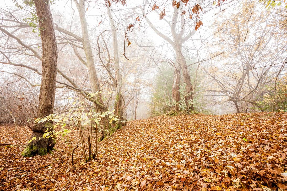 IMAGE: http://pre02.deviantart.net/98f6/th/pre/i/2016/331/f/e/late_autumn_by_snomanda-dapr7bd.jpg
