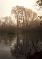 Mist Trees by snomanda