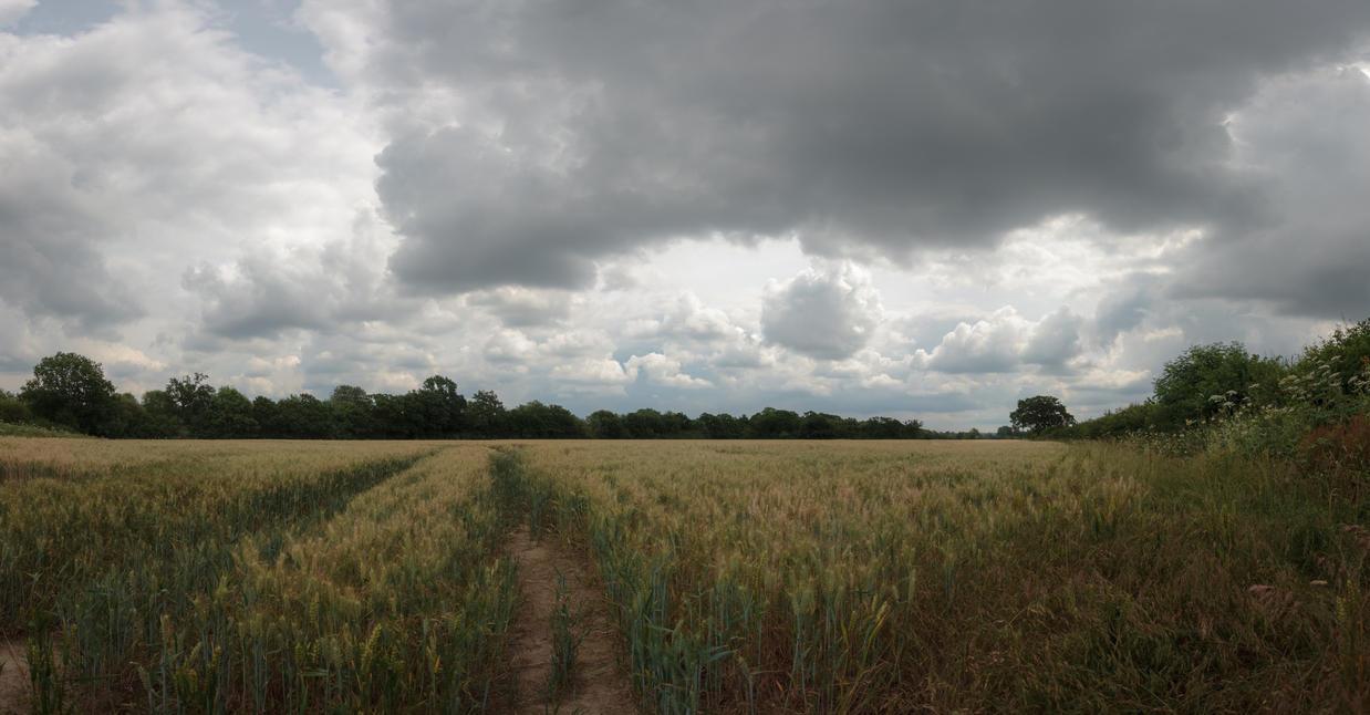 Wheat Day by snomanda