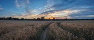 Dusky Wheatfield by snomanda