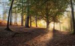 Autumn Morning III