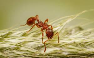 Pavement Ant by snomanda