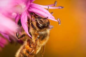 Honey by snomanda