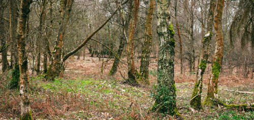 Treefus by snomanda
