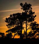 Silhouette Sunset by snomanda