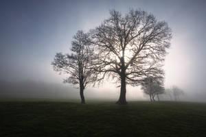 Tree V by snomanda