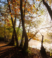 Autumn Morning I