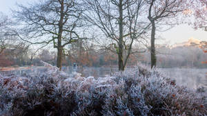 Lakeside Frost