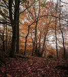 Autumn by the Beech